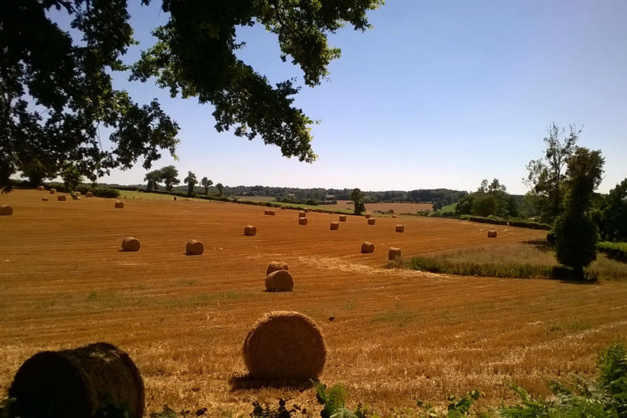 Summer Harvest in Vijon